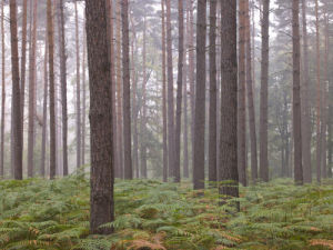 Tree trunks in forest by Assaf Frank