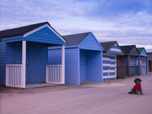 A dog sitting near beach huts, West Wittering Beach, UK by Assaf Frank