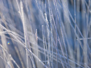 Frost on grass close-up by Assaf Frank