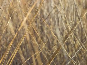 Grass close-up full frame by Assaf Frank