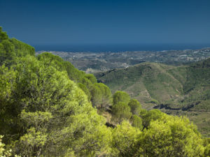 Pine Trees, Costa del Sol, Spain by Assaf Frank