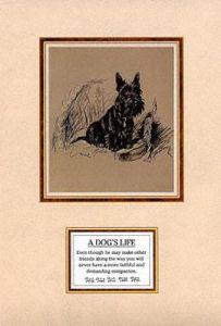 Dog's Life II by Mac Lucy Dawson