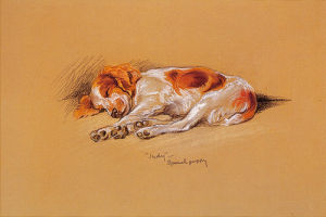 Judy, a Spaniel Puppy by Mac Lucy Dawson