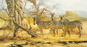 Zebras by Craig Bone