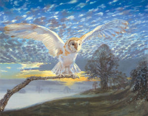 Barn Owl by John Cooksley