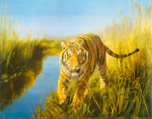 Tiger in the Indian Sunderbans by Leonard Pearman