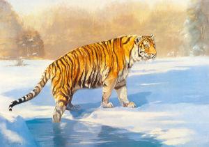 Tunja, the Siberian by Leonard Pearman