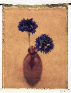 Cornflowers by Scott Morrish