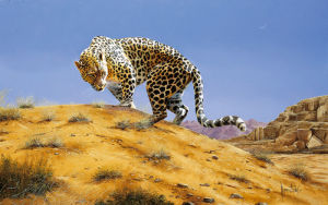 Arabian Leopard by Spencer Hodge