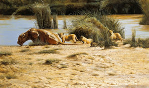 At the Waterhole by Spencer Hodge