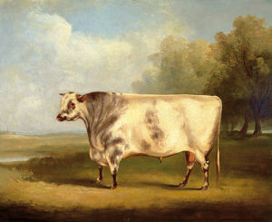 Prize Bull by William Henry Davis