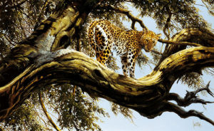 Leopard sentry by Spencer Hodge
