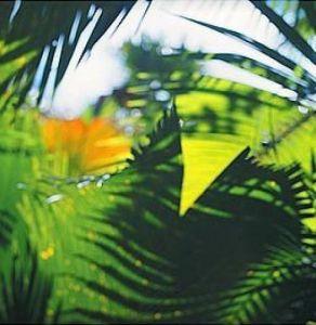 Palm Shadows II by Chris Simpson