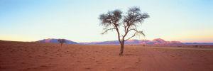 Desert Twilight by Chris Simpson