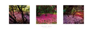 Fallen Petals by Bent Rej