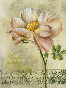 Floral Blush IV by Dennis Carney