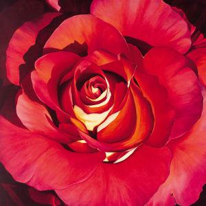 Spanish Rose by Jennifer Harmes