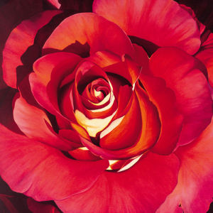 Spanish Rose by Jennifer Harmes