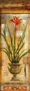 Rojo Botanical I by John Douglas