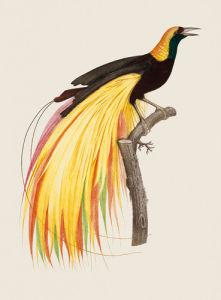 Le Grand Oiseau de Paradis Emeraude by Jacques Barraband