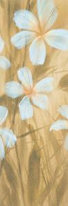 White Hibiscus II by Robert Holman