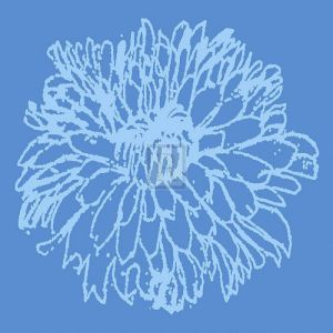 Chrysanthemum Bloom II by Alice Buckingham