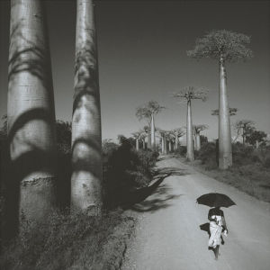 Allee des Baobabs II by Chris Simpson