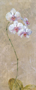 Contemporary Orchid I by Dennis Carney