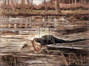 Bramshaw Bob Swimming by Ward Binks