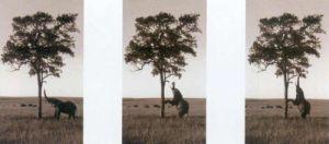 Kichwa Tembo, Masai Mara G 6 by Erin Clark