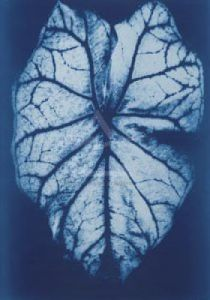 Leaf Study I, 2002 by Hager