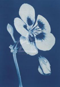 Open Geranium II, 2002 by Hager