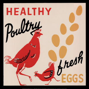 Healthy Poultry - Fresh Eggs by Retro Series