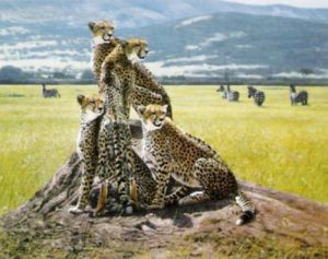 Cheetah Watch by John Banovich