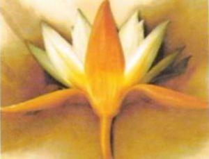 Orange Lotus by Cameron