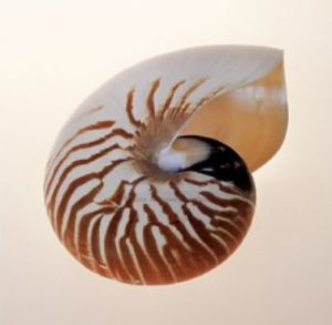 Nautilus by Tom Artin