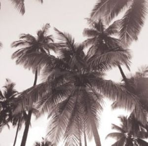 Island Palms by Michael Kahn