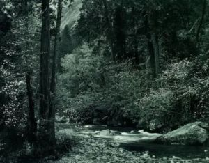 Tenaya Creek by Ansel Adams
