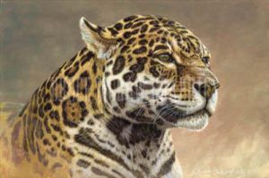 Jaguar by Kalon Baughan