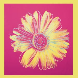 Daisy, c.1982 (fuchsia & yellow) by Andy Warhol