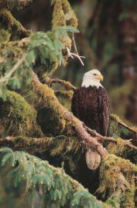 Silent Sentinel, Alaska by Art Wolfe