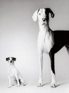 Domino and Daisy by Amanda Jones
