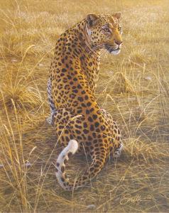 Leopard by Dan Smith