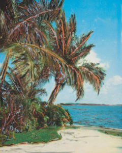 Palm Isle by Leslie Mueller