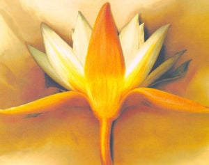 Orange Lotus by Betsy Cameron