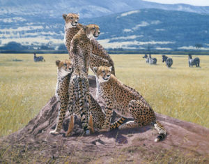 Cheetah Watch by John Banovich