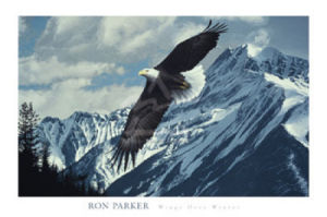 Wings over Winter by Ron Parker