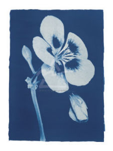 Open Geranium #2, 2002 by Hager