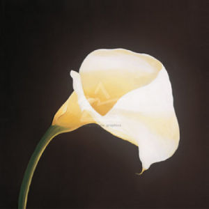 Calla Lily by Hampton Hall