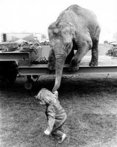 Girl pulling an elephant by his trunk by John Drysdale